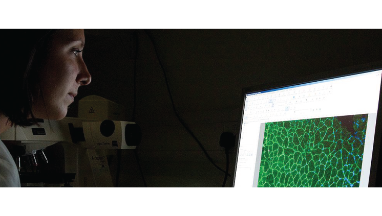 Professor Marco Sartim é editor de Research Topic da Revista Frontiers in Immunology